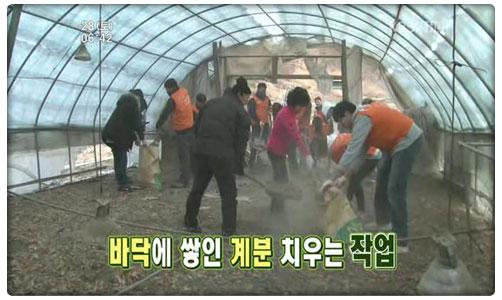 KBS 농촌사랑 운동본부 화면 캡춰 이미지 : 닭축사 청소모습